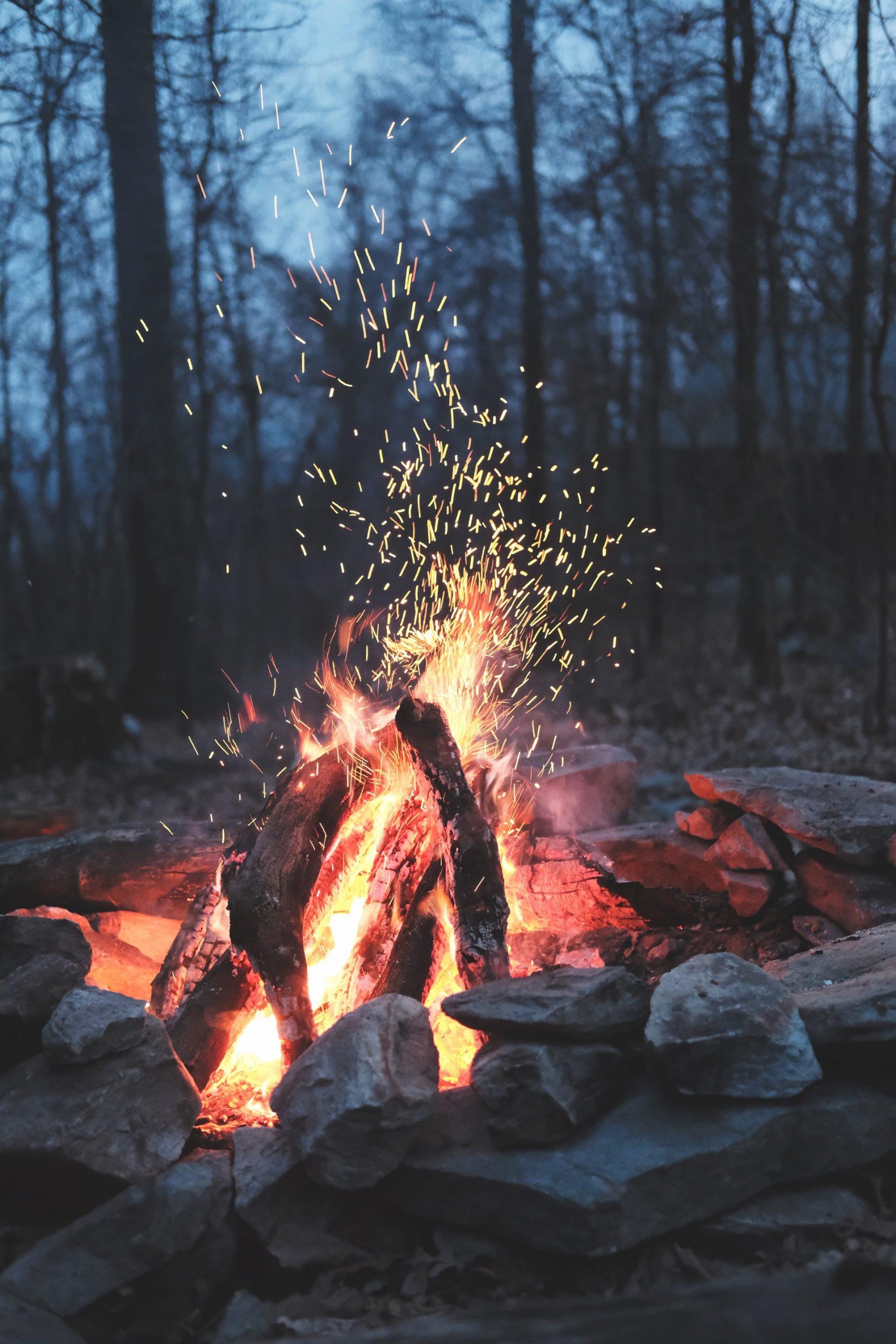 bonfire-forest